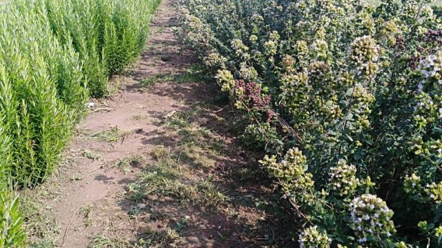 imagen de la noticia: Coordina un docente de Agronomía la Red Iberoamericana de Investigación en Agricultura Orgánica
