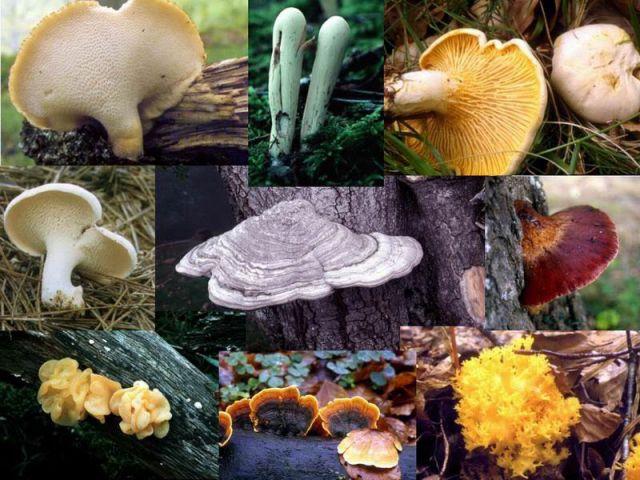 Imagen Noticia: Jornada sobre hongos en la Casa Coleman
