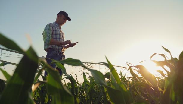 Imagen Noticia: Una app que permite mejorar la producción agropecuaria usando información sate